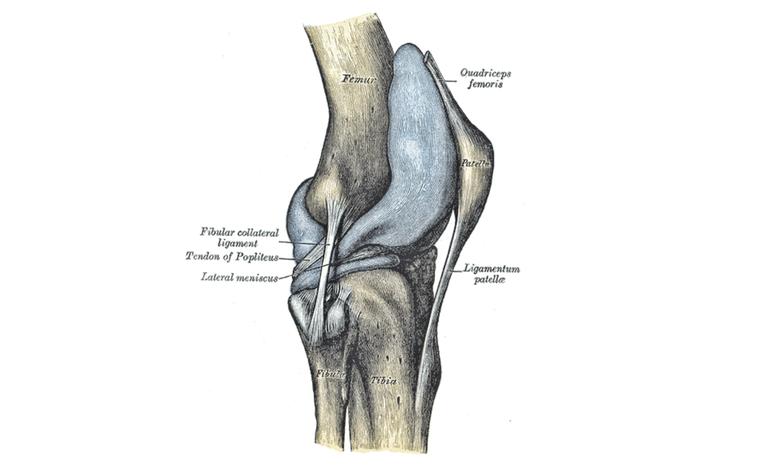 Fisiosaludable - Rótula o patela