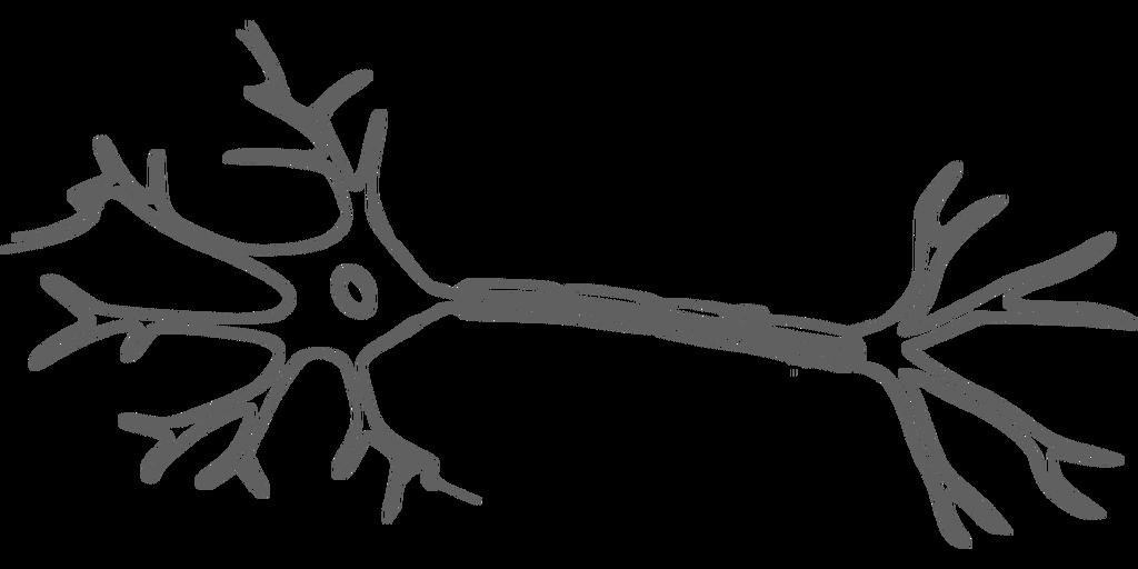 Fisiosaludable - Neurona