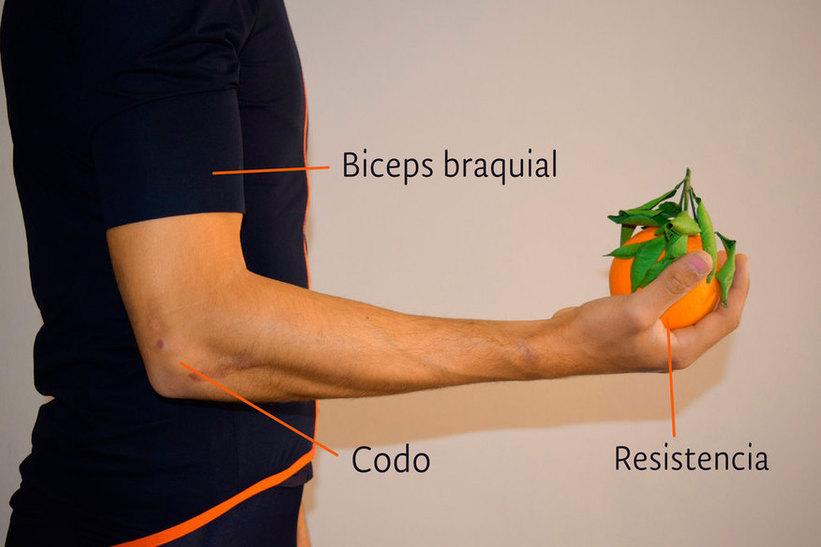 Fisiosaludable - Los tres tipos de acción muscular